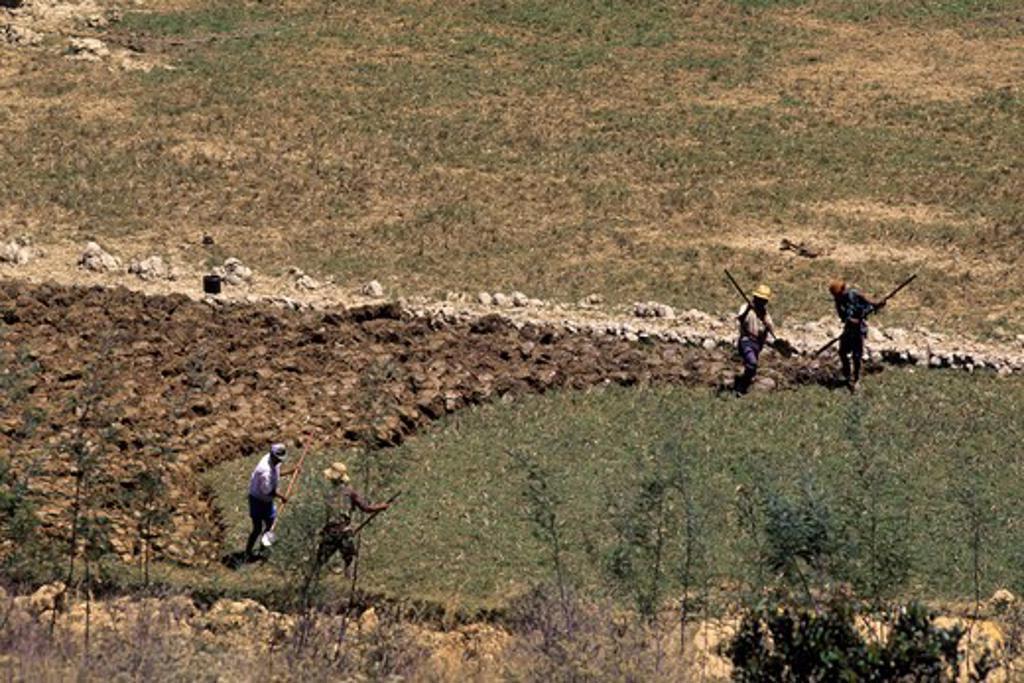 Stock Photo: 4168-4720 Madagascar, near Ambatolampy, farmers digging up fields