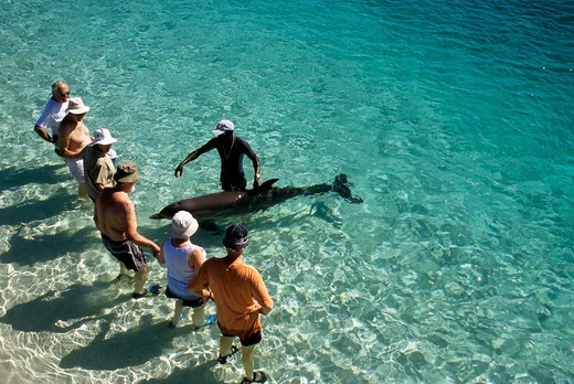 honduras, bay islands, roatan island, anthony's key resort, dolphin encounter, tourists with dolphin : Stock Photo