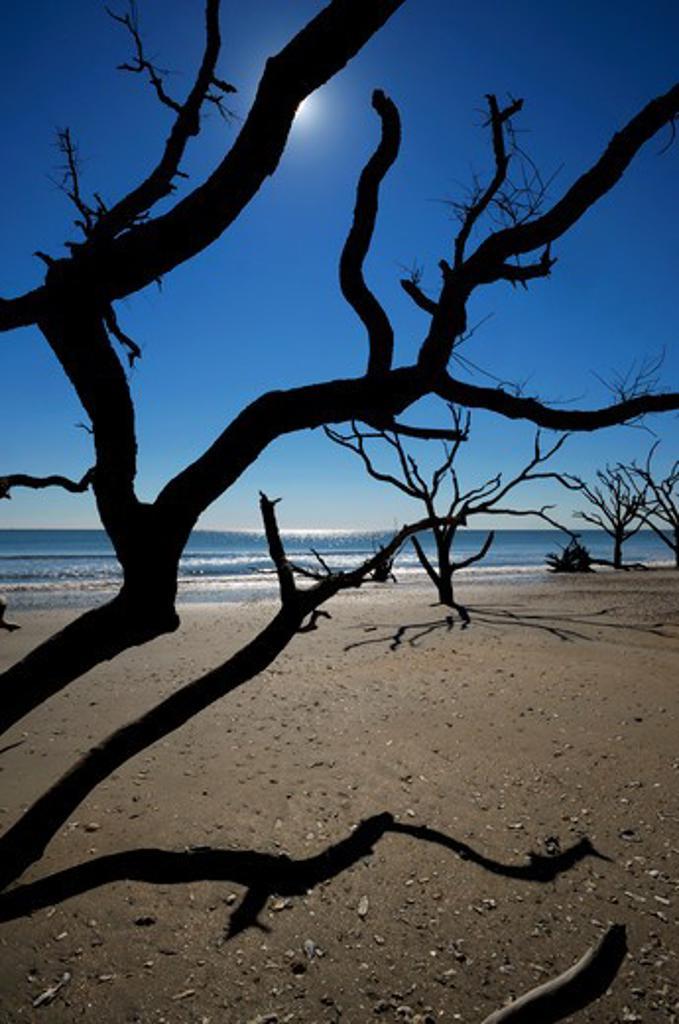 Stock Photo: 4168-5267 usa, south carolina, edisto island, botany bay, dead trees on beach