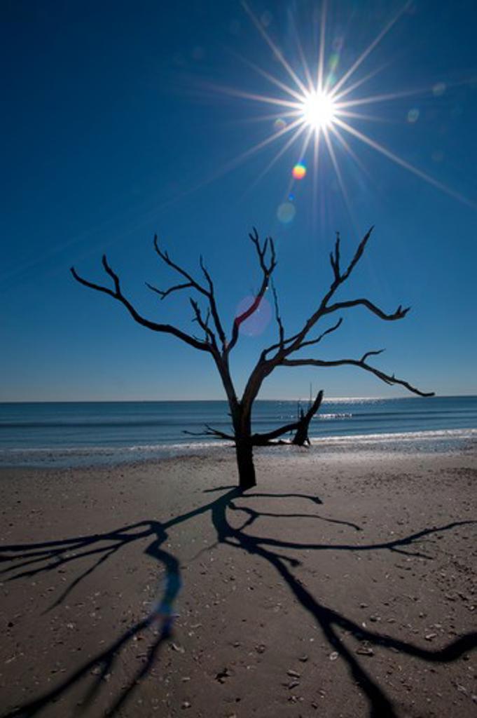 usa, south carolina, edisto island, botany bay, dead trees on beach, sunburst : Stock Photo