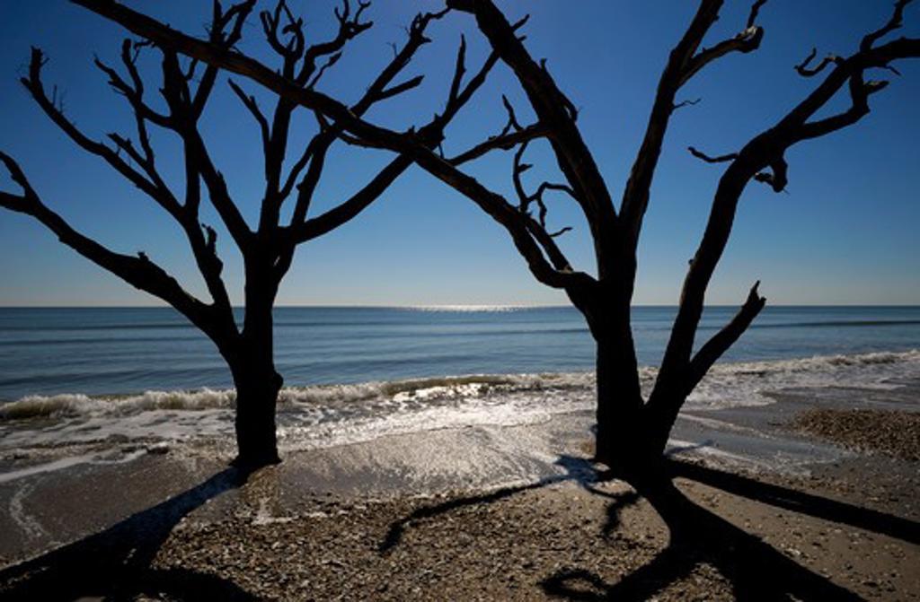 Stock Photo: 4168-5270 usa, south carolina, edisto island, botany bay, dead trees on beach