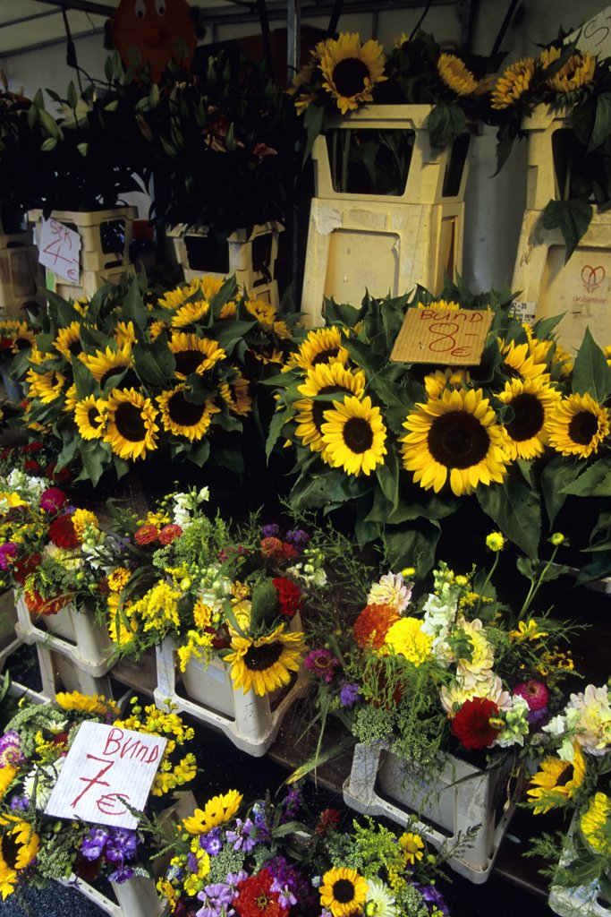 Austria, Salzburg, Marketplace, Flowerstand With Sunflowers : Stock Photo