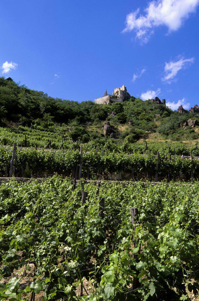 Austria, Wachau Valley, Durnstein, Vineyards with Castle Kuenringerburg in distance : Stock Photo