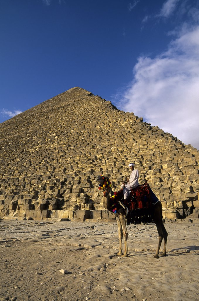 Egypt, Cairo, Giza, Cheops Pyramid With Local Man On Camel In Foreground : Stock Photo