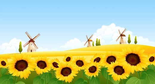 Stock Photo: 4170R-5146 Sunflowers in a field with traditional windmills in the background