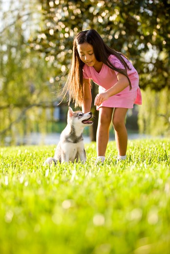 Young Asian girl training puppy to sit : Stock Photo