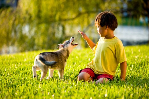 Stock Photo: 4172R-1570 Young Asian boy playing with puppy on grass