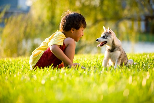 Young Asian boy playing with puppy on grass : Stock Photo