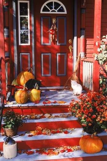 Autumn colors and Halloween feeling in New England with cat and pumpkins on front porch : Stock Photo