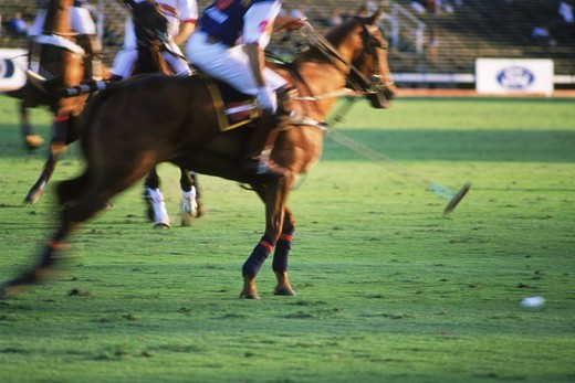 Polo players in action at Campo de Polo in Buenos Aires, Argentina : Stock Photo
