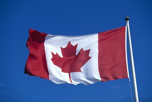 Canadian national flag featuring the maple leaf : Stock Photo