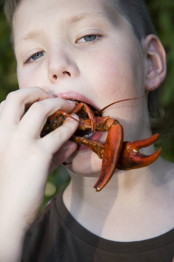 Stock Photo: 4176-20551 Portrait of a boy eating a crayfish