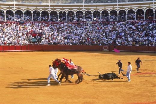 Stock Photo: 4176-20852 Horses draging away dead bull from ring in Seville, Spain