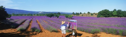 Stock Photo: 4176-20867 Female artist painting field of lavender in Provence