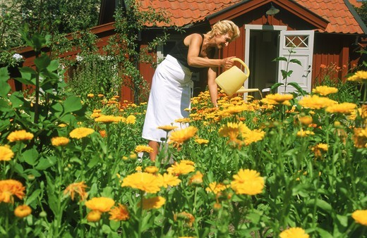 Stock Photo: 4176-21096 Woman watering flowers in beautiful garden on Master Pers Grand in Stockholm