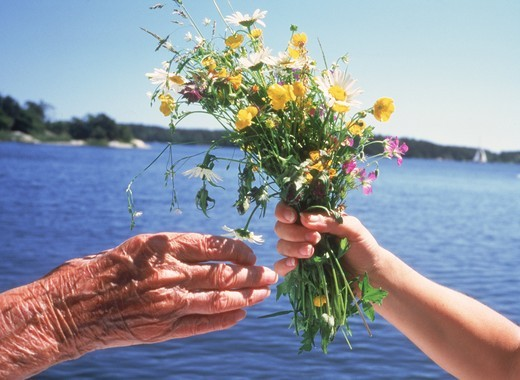 Grandchild offering bouquet of wild flowers to grandmother : Stock Photo