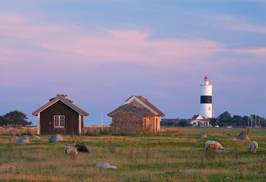 Houses in a field with Lange Jan lighthouse in the background, Sodra Udde, Oland, Sweden : Stock Photo