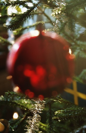 Christmasball in a christmastree : Stock Photo
