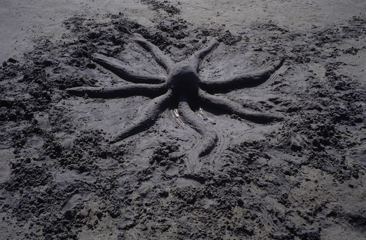 A sand octopus : Stock Photo