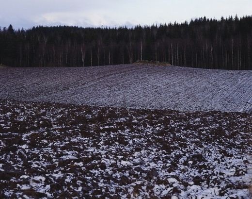 Thawing snow on a field, Sweden : Stock Photo