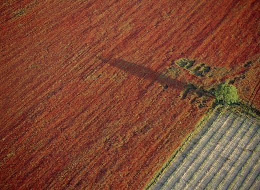 Stock Photo: 4176-37956 Poppy field, Provence, France
