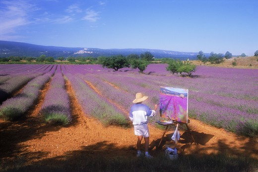 Female artist painting field of lavender in Provence : Stock Photo
