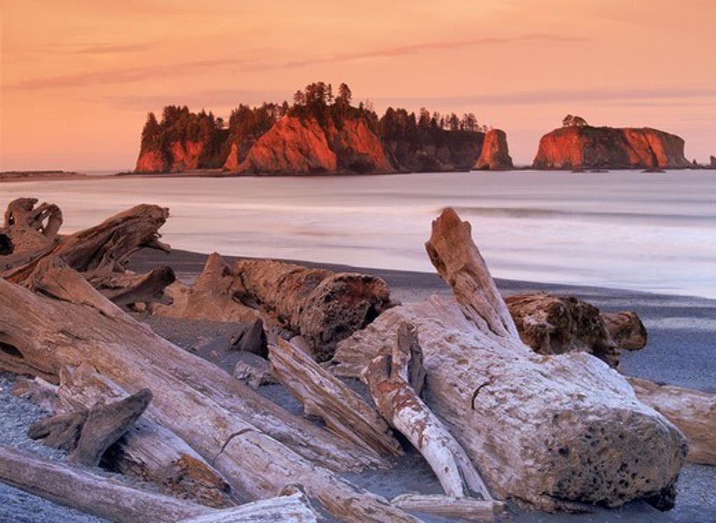 Logs and driftwood along Olympic Peninsula shoreline in Washington : Stock Photo