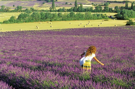 Woman in local dress in field of lavender in Provence : Stock Photo