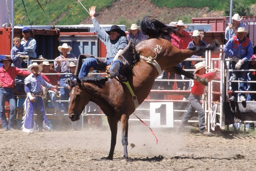 Bronco riding in New Zealand rodeo : Stock Photo