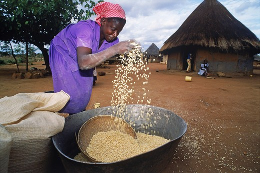 Woman cleaning or chaffing corn in Zimbabwe village : Stock Photo