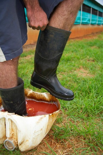Stock Photo: 4179-1228 Putting on and disinfecting boots on a poultry farm. Near Howick. KwaZulu Natal. South Africa