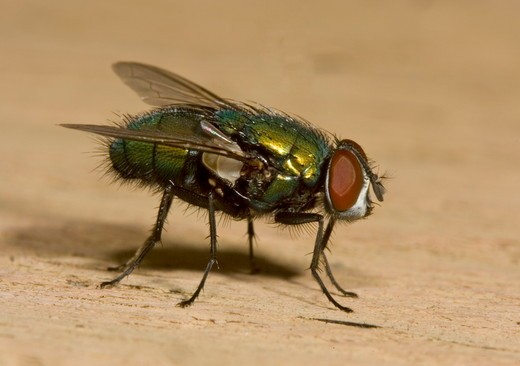 Blowfly Backyard; Philadelphia, PA : Stock Photo