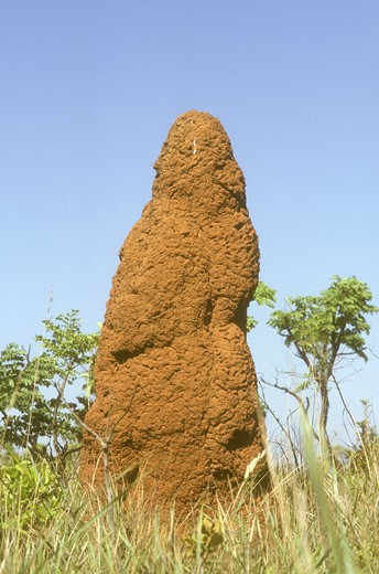 Stock Photo: 4179-17646 Termite Mound, Emas NP, Goias, Brazil