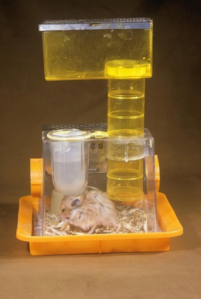 Hamster Habitrail : Stock Photo