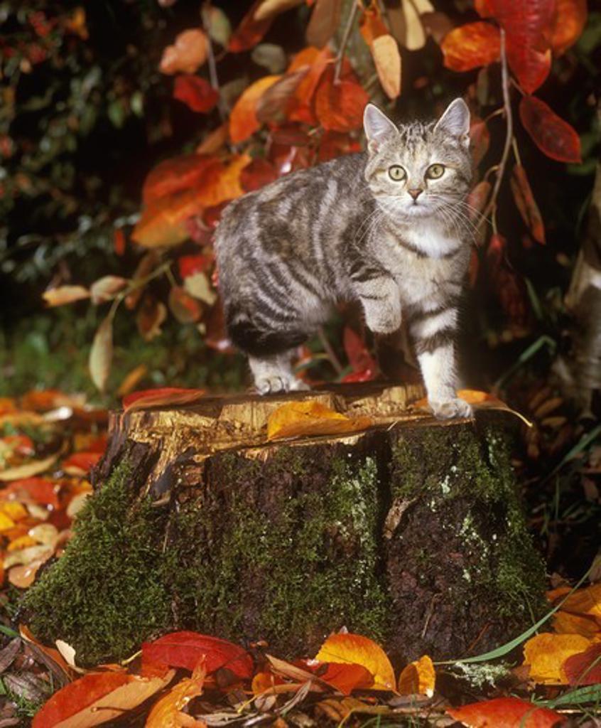 Kitten in Autumn : Stock Photo