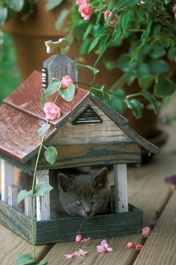 Stock Photo: 4179-28764 Kitten in Birdhouse Western Pennsylvania