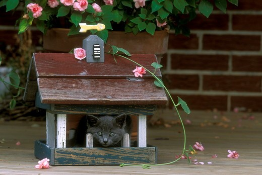 Stock Photo: 4179-28765 Kitten in Birdhouse Western PA