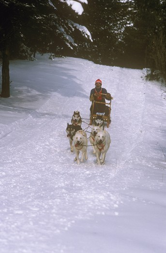 Stock Photo: 4179-29702 Dog Sled Racing NR Cold Creek Conservation Area Ontario