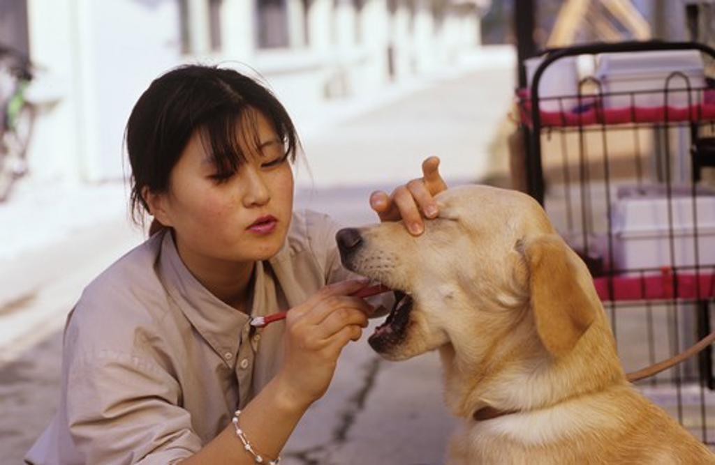 Korea Guide Dog Training cleaning teeth : Stock Photo