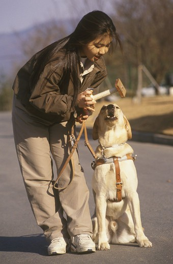 Stock Photo: 4179-29710 Korea Guide Dog Training w/ handler