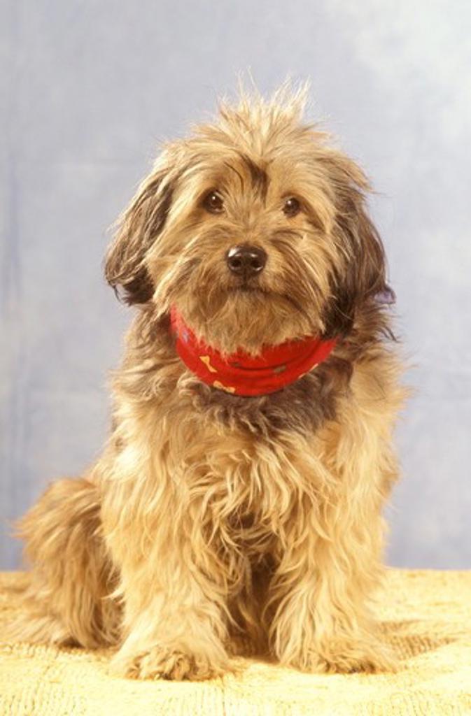 Mixed Breed Dog : Stock Photo