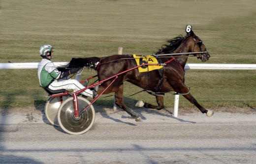 Stock Photo: 4179-33028 Full stride trot, harness futurity race at Saginaw Raceway, MI