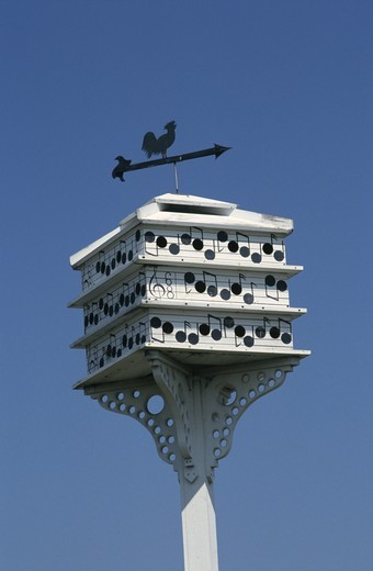 Purple Martin House (Progne subis) : Stock Photo