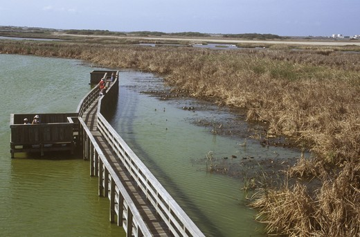 Stock Photo: 4179-4051 Raised Walkway for Birding at Port Aransas Birding Center, Texas