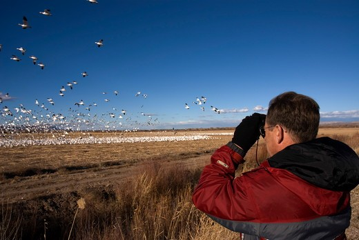 Mike Vining watching Snow Geese, Bosque del Apache NWR, NM, Dec 2006 : Stock Photo