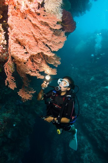 Stock Photo: 4179-41001 MR Diver on beautiful Reef System with Walls, Cuts and Swim-throughs, West Passage North near Panapompom Island in the Conflict Group,  Papua New Guinea
