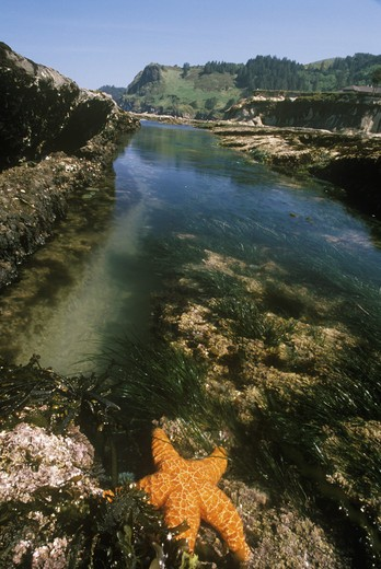 Tidepools during low tide, Devil's Punchbowl State Park, coast of Oregon : Stock Photo