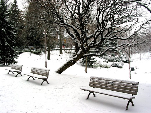 Winter benches in a park under a tree  covered with snow. Big snowflakes falling are seen at full size. : Stock Photo