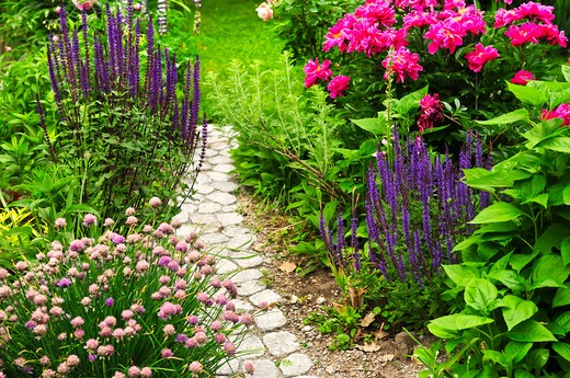 Lush blooming summer garden with paved path : Stock Photo