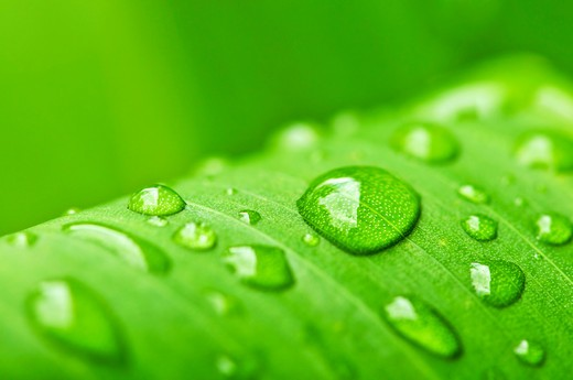 Natural background of green plant leaf with raindrops : Stock Photo
